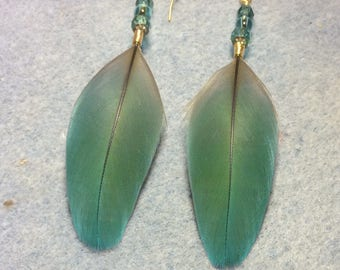Turquoise macaw feather earrings adorned with turquoise Czech glass beads.