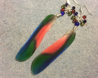 Blue, red and green Pionus feather earrings adorned with blue, red and green dangling Czech glass beads.