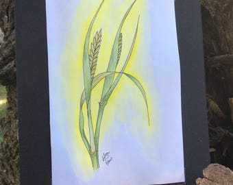 Barley study: original watercolor and ink painting