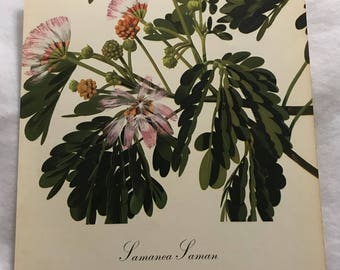 Samanea Saman (Saman) Bernard & Harriet Pertchik 1951 Print from Flowering Trees of the Caribbean Alcoa Steamship