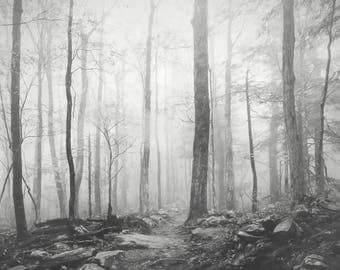 Tree Photograph, Black & White, Foggy Landscape, Painterly, Trees in Fog Photograph, Tree Print, Nature Photograph, Gray Wall Art
