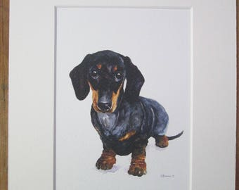 """Watercolour print of a Dachshund. Printed directly onto watercolour paper. In a  10"""" x 8"""" mount."""