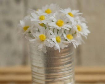1/6 daisies in tin can