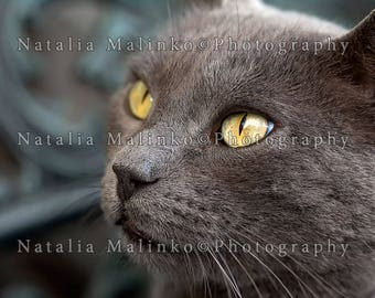 Cat, portrait. Digital image for download, wallpaper, screen saver for PC, Mac.