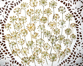 Dried pressed flowers for crafting, real dried Dill flowers 30 pcs.