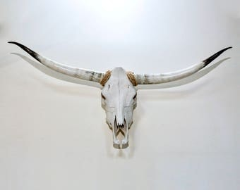 Authentic Longhorn Steer Skull Cow Skeleton with Original Horns [5209]
