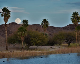 Desert Oasis.  Palm Trees and Full Moon in Desert Landscape with Water.  Photograph  Squaw Lake, Arizona.  Digital Download