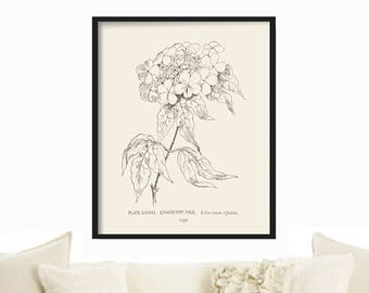Farmhouse Decor - Extra Large Print - Botanical Print - French Country Decor - Cottage Decor - Rustic Home Decor - Vintage Country Print