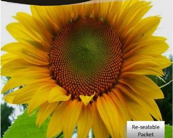 Grey Stripe Sunflower 25 Seeds Packet