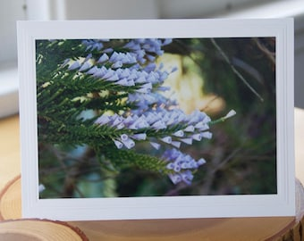 Photo Greeting Card   Photography Card   Enlargements   Fabiana   Violet Pichi   Floral Photography   Lavender Flowers   Purple Flowers