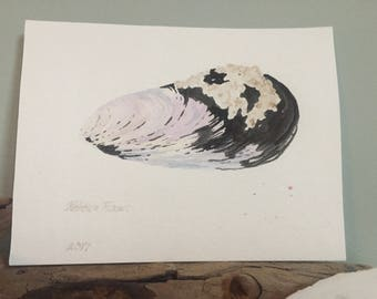 Barnacle Mussel Shell Original Watercolor