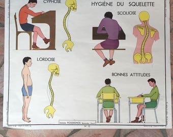 ROSSIGNOL MDI Vintage French School Poster anatomy Two Sides MUSCLES 03021810