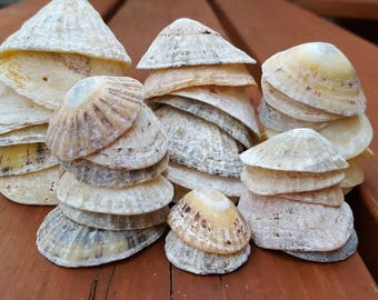 Limpet shell lot, natural, worn limpet shells from Ireland,  seashells for crafts, 345g of seashells, #311
