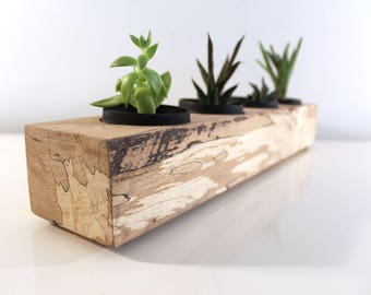 "18"" Spalted Maple Succulent Planter, Exotic Wood Herb Garden, A Unique Eco-Chic House Warming Gift"