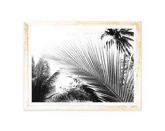 Poster, tropic, palmtrees, holiday, palms, Asia