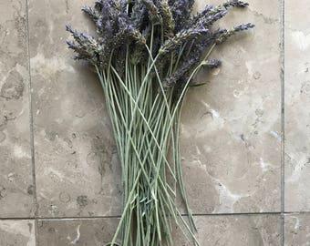 12in Long Stem Organic Natural Air Dried California USA Lavender