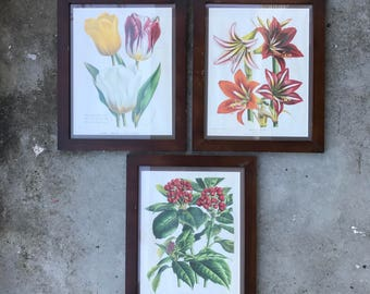 Set of 3 Framed Floral Prints Flowers and Berries Timber Framed Art Prints