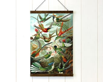Bird Pull Down Chart, Educational Chart Diagram, Ernst Haeckel_Trochilidae, School chart, Bird art, 20x28