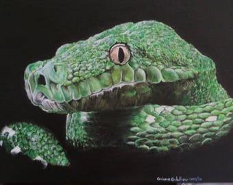 Green arboreal python, acrylic on canvas, naturalistic painting
