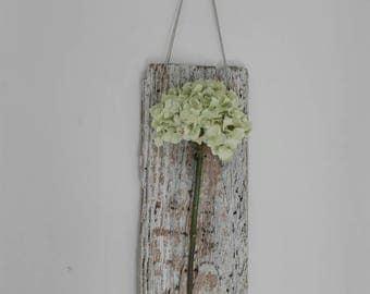 Hydrangea flower, driftwood wall