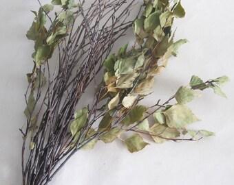 Natural Birch Twigs, Birch Branches, Natural Decor, Forest Craft Supply