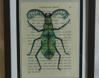 Looking Glass Insect