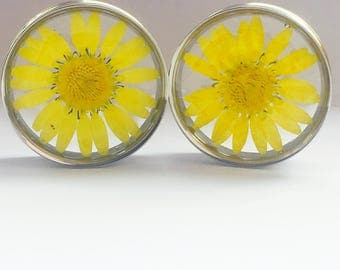 large yellow daisy plugs, ear stretchers, ear guages, ear plugs.
