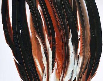 Rooster Feathers | Rooster Tail Feathers | Feathers | Home Decor |