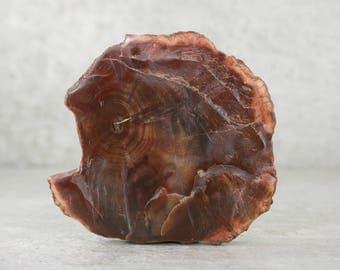 Petrified Wood, Natural Fossilized Wood Specimen, Collector Specimen, Rockhound Specimen, Polished Display Petrified Fossil Wood
