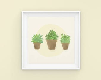 Succulent | House Plant | Plant Baby | Illustration | Flower | Poster