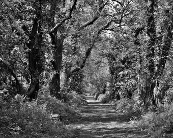 Black and White Tree Canopy Photographic Print