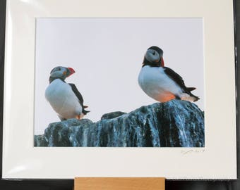 "Puffin Portrait  ""Flirtation"" Photographic Print"