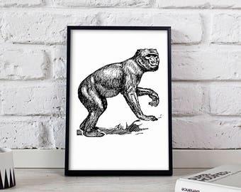 Monkey Animal poster, Monkey Animal wall art, Monkey Animal wall decor, Monkey Animal print