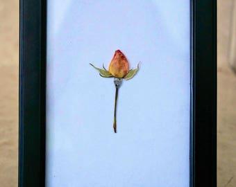 Framed Pressed Rosebud