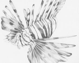 Lion Fish_Original Drawing