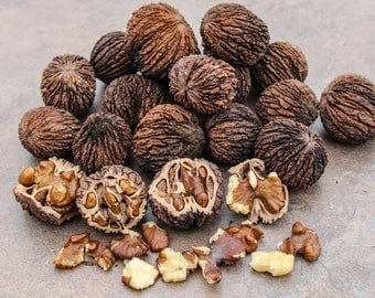 5 Pounds Black Walnuts In-Shell Hulled Raw 2017 Crop Grown Missouri 100+ Nuts - Crafts, Squirrel Food, Snack, Baking and More!