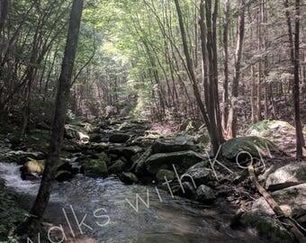 Conasauga River - Cohutta Wilderness GA #7