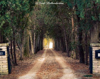 Landscape Photography Sunny Path Trees Print