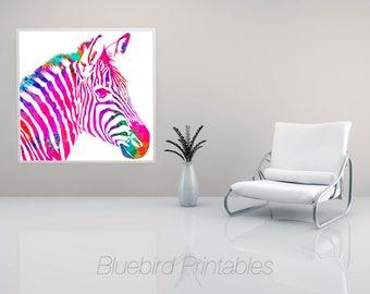 Rainbow Zebra on White