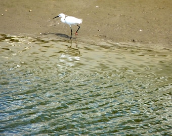 Egret on the edges of the Seudre