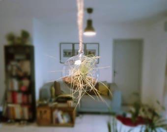 Hanging from a mini terrarium with tillandsia