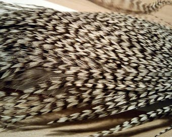 x 4 m Lancet Rooster chinchilla feathers (striped black and white)
