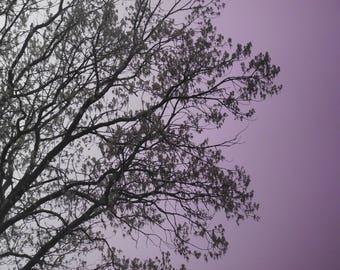 Tree Photography - Gradient Trees