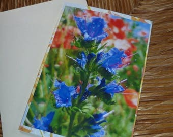 "Double ""Duo of wild flowers"" card 10 5x15cm"
