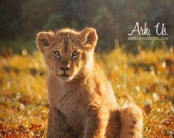 Poster portrait of a lion cub on a background of Orange and autumn leaves 30 x 45 cm