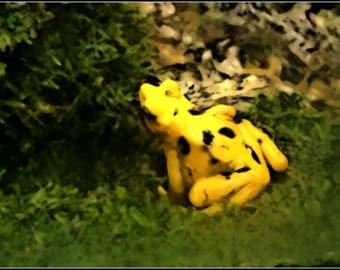Dart frog (photo)