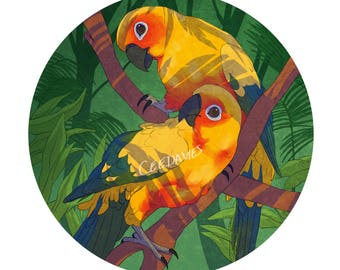 Sun Conure Greetings Card
