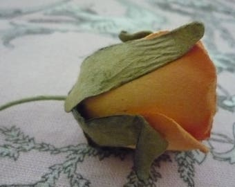 Small paper pink orange and its green leaf