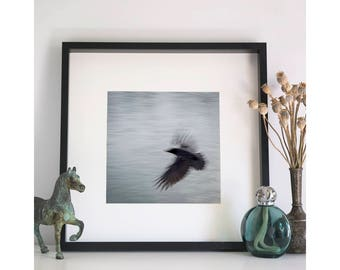 Crow, Photographic Print, 12x12