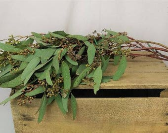 FRESH Seeded eucalyptus, eucalyptus bunch, real eucalyptus, fresh greens, fresh seeded eucalyptus, green euc, seeded euc, fresh greenery